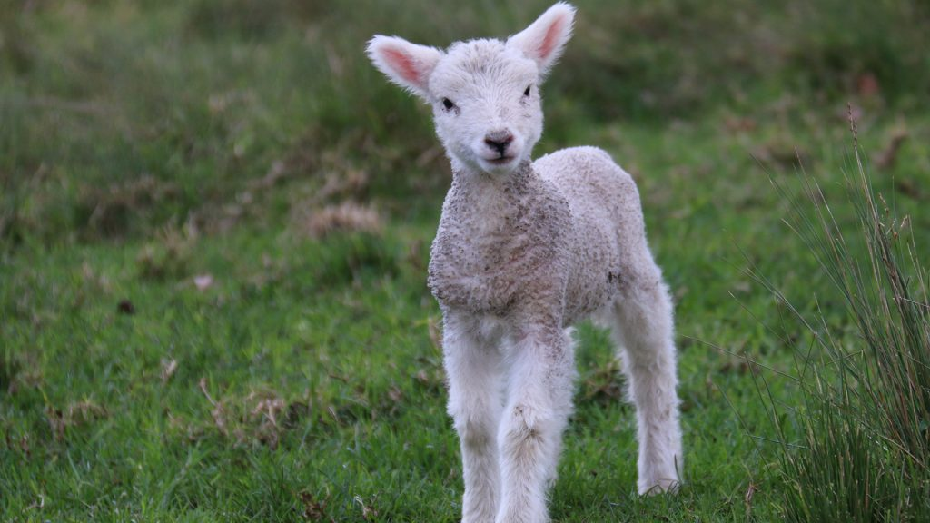 8 Adorable baby animal facts